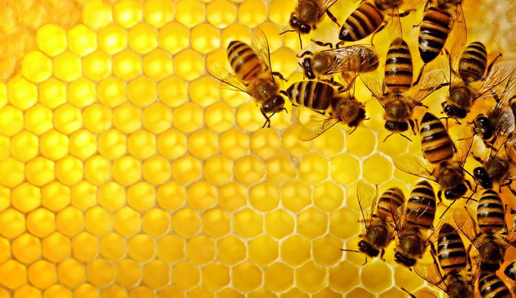 蜂の駆除-2